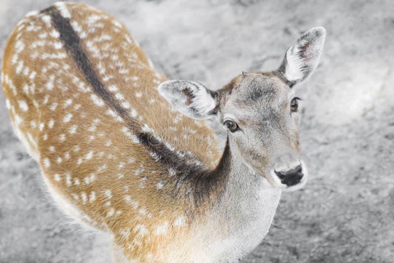 Cute roe deer stock photo