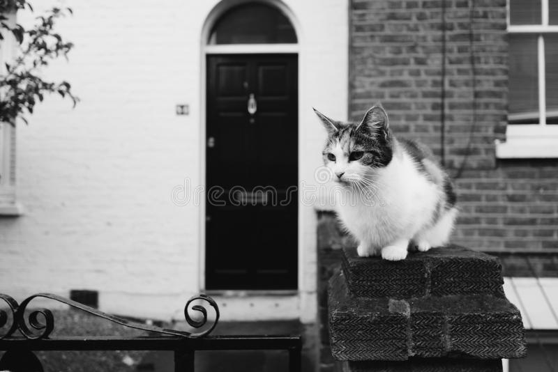 Cute Rural Cat in Black and White. A cute rural cat staring with an alert expression stock photo
