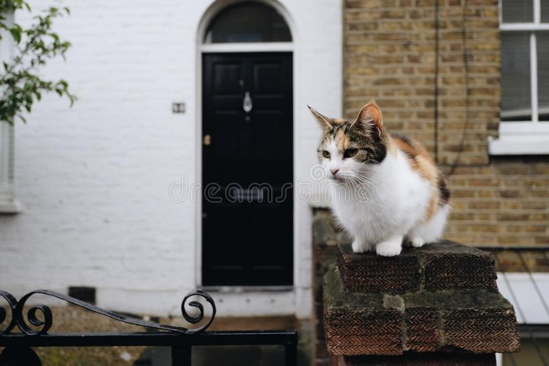 Cute Rural Cat. A cute rural cat staring with an alert expression royalty free stock photos