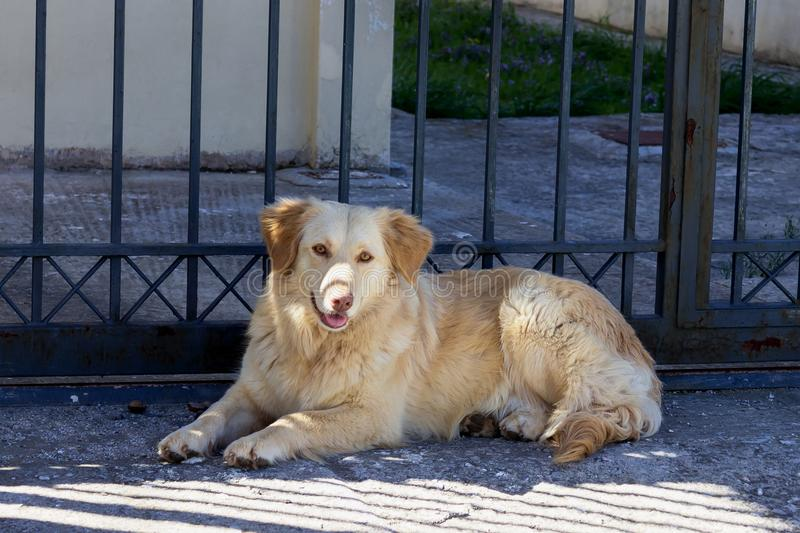 Cute sad stray dog is lying on the street. Concept - abandoned h. Omeless animals royalty free stock photos