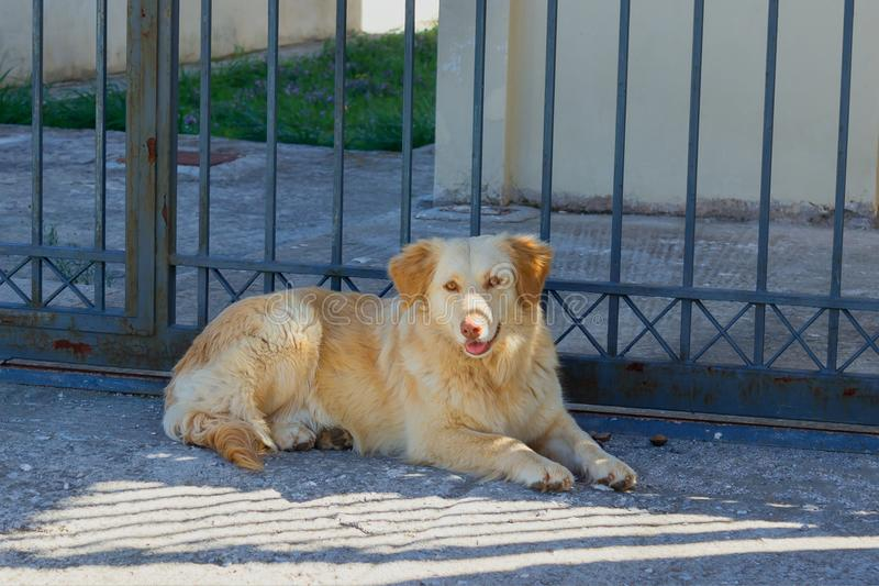 Cute sad stray dog is lying on the street. Concept - abandoned h. Omeless animals stock photos