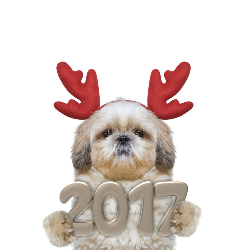 Cute santa dog in reindeer antlers with 2017 new year numbers stock photos