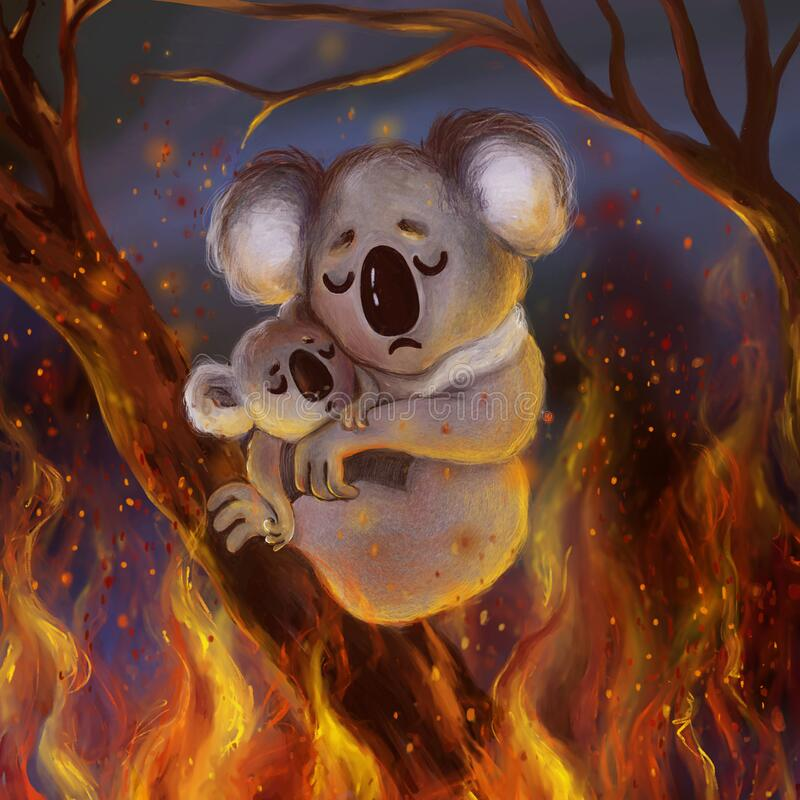 Cute scared koala with a baby koala trying to escape from the burning forest fires in Australia. Pray for Australia save the forest cartoon illustration stock illustration
