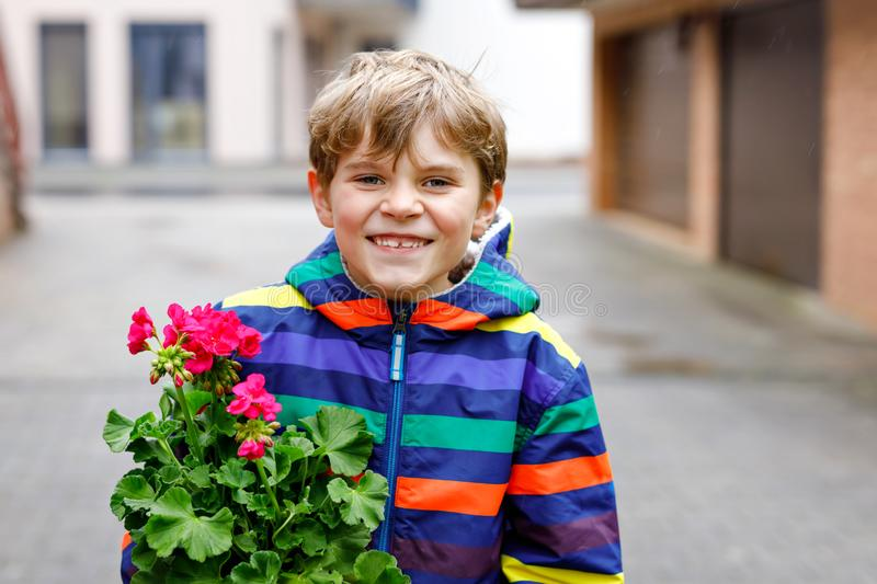 Cute school kid blond boy planting seeds and seedlings of geranium flowers in garden. Schoolkid making ecology project royalty free stock images