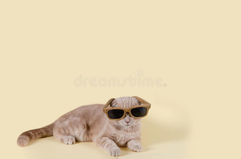 Cute scottish fold cat in sunglasses lying on yellow background and. Copy space for text. Sunglasses sale concept. For banner. Optic shop royalty free stock photos