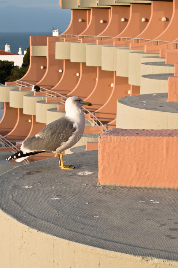 Cute seagull pooping on hotel terrace royalty free stock photo