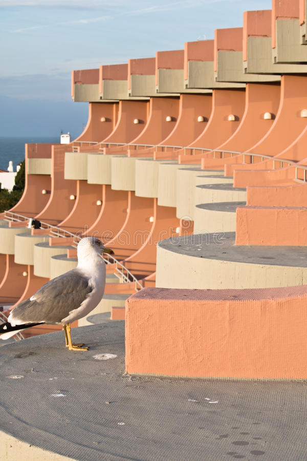 Cute seagull pooping on hotel terrace royalty free stock images