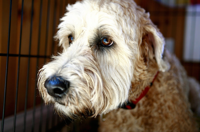 Cute Shaggy Dog. A cute shaggy dog wiaiting for a home royalty free stock images