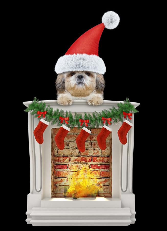 Cute shitzu santa dog near the fireplace. Isolated on black royalty free stock photos