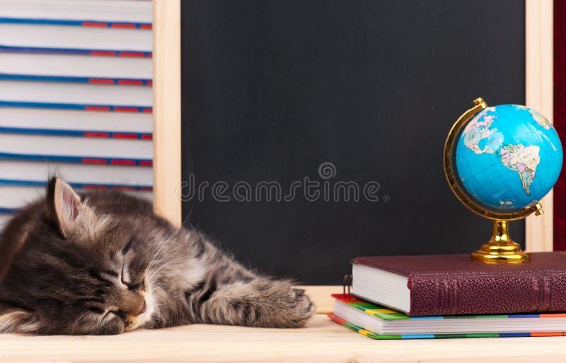 Cute siberian kitten stock photography