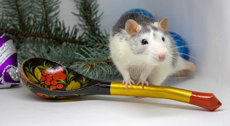 Cute silver rat sits around a large wooden spoon. Chinese New Year symbol 2020 stock photos