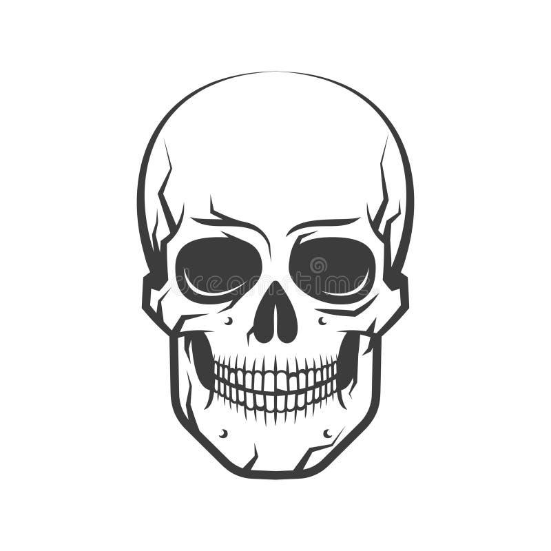Realistic human skull stock illustration