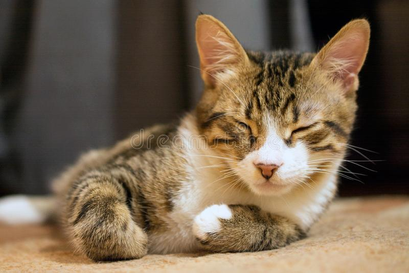 Cute sleeping cat. Close up of cute sleeping cat, deed, selective , blurred background stock images