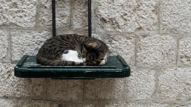 Cute sleeping gray and white cat, It slept on the green wooden table in the street , Concept - relax. Happy Cat sleep lying in. Wood in the street of Kotor stock image
