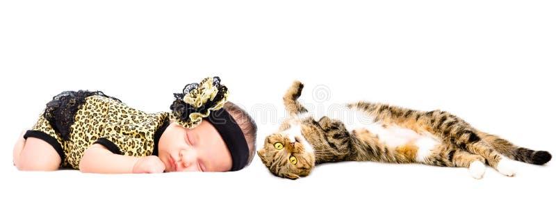Cute sleeping newborn girl and cat Scottish Fold. Isolated on white background royalty free stock photo