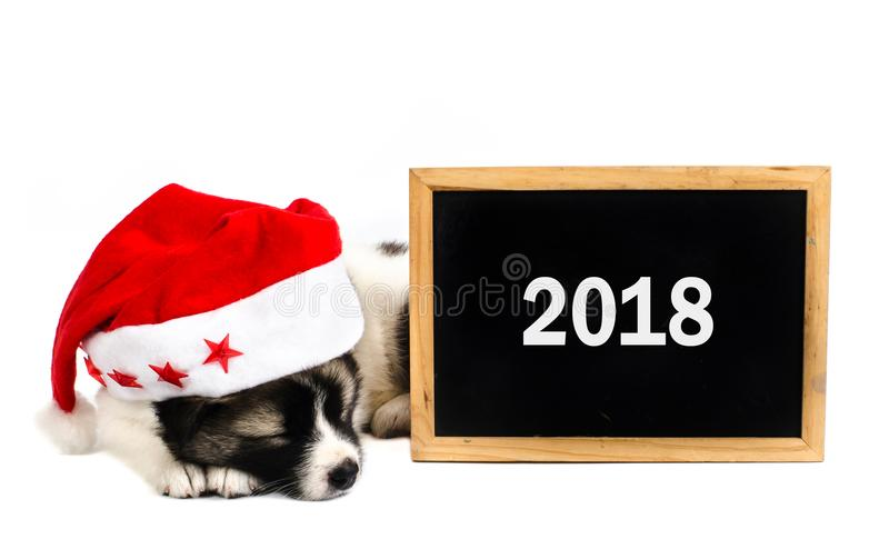 Cute sleeping puppy in a Christmas - Santa hat with 2018 blackboard. Isolated on a white background royalty free stock images