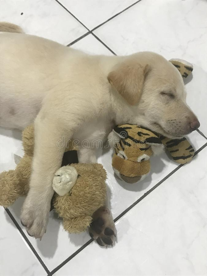Sleeping Resting Puppy With Stuffed Toys Stock Image ...