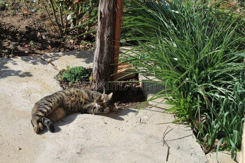 Cute sleeping tabby cat royalty free stock image