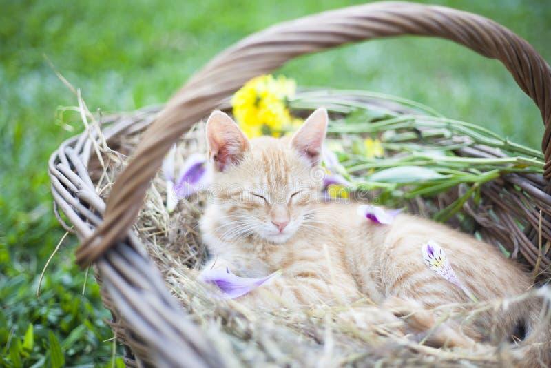 Little cat sleepingin wicker basket royalty free stock image