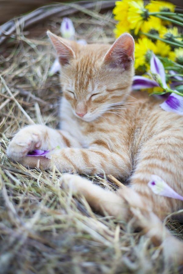 Little cat sleepingin wicker basket stock images