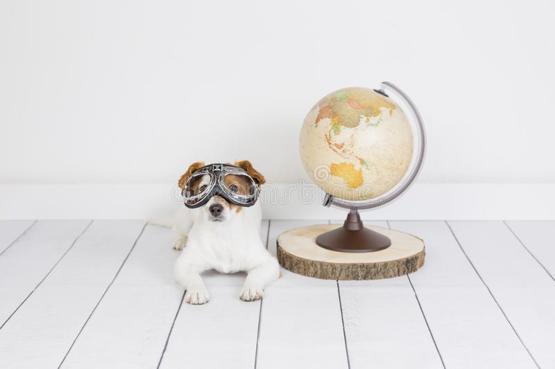 Cute small beautiful dog sitting on the floor, white background with world globe besides. He is wearing aviator glasses. Travel royalty free stock photos
