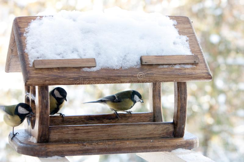 Cute small birds Parus major tit feed in wooden feeder on frosty winter day close up. Cute small birds Parus major tit feed in wooden feeder on frosty winter day royalty free stock photos