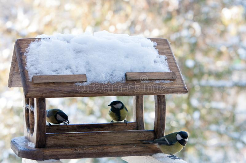 Cute small birds Parus major tit feed in wooden feeder on frosty winter day,close up. Cute small birds Parus major tit feed in wooden feeder on frosty winter day royalty free stock photo