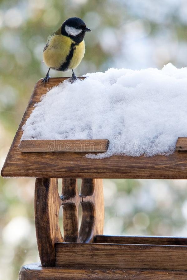 Cute small birds Parus major tit feed in wooden feeder on frosty winter day, close up. Cute small birds Parus major tit feed in wooden feeder on frosty winter stock image