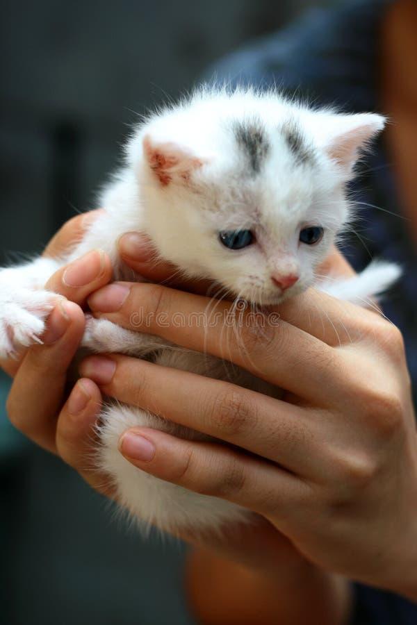 Cute small cat. A white cute small cat stock photo