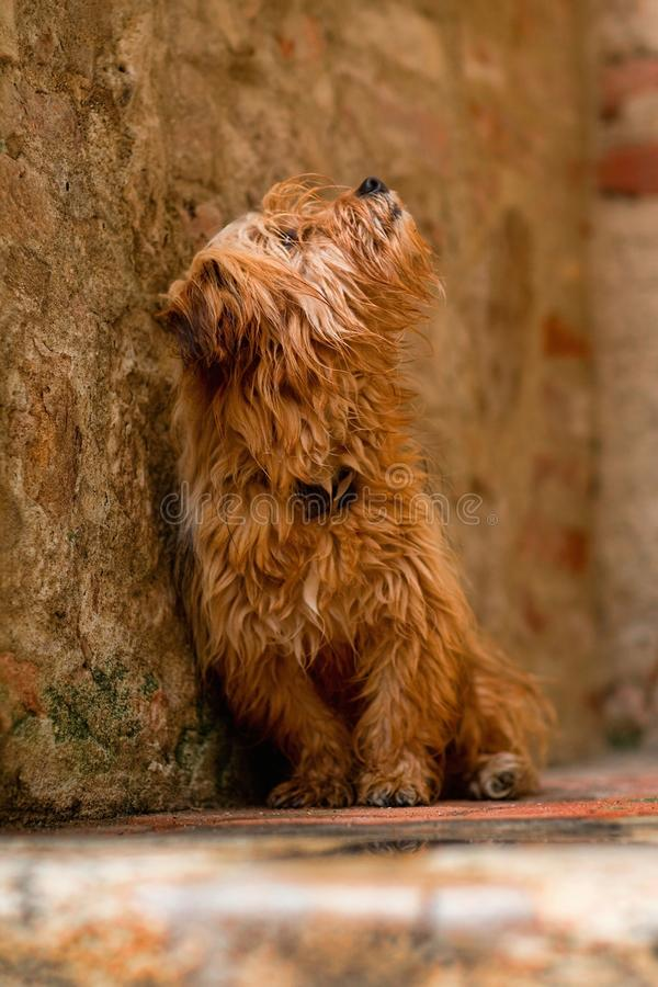 Cute small dog stock images