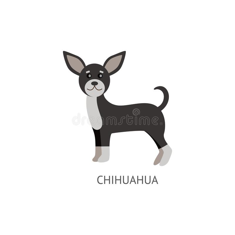 Cute small dog of breed Chihuahua flat cartoon vector illustration isolated. royalty free illustration