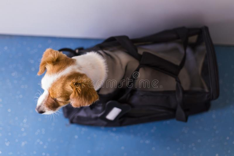 Cute small dog in his travel cage ready to get on board the airplane at the airport. Pet in cabin. Traveling with dogs concept. International, funny, journey stock photography