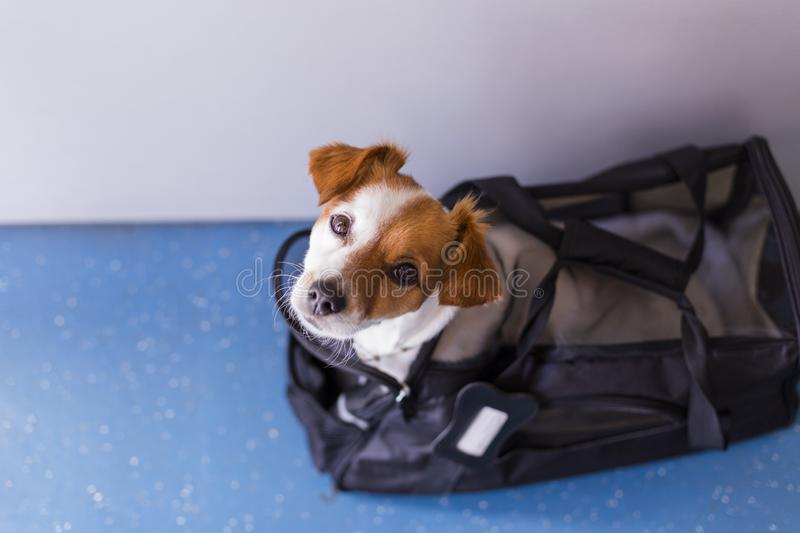 Cute small dog in his travel cage ready to get on board the airplane at the airport. Pet in cabin. Traveling with dogs concept. International, funny, journey royalty free stock photography