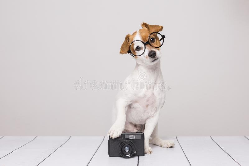Cute small dog sitting on the white floor and wearing glasses. Looking intelligent and curious. Vintage camera besides him. Pets stock photography