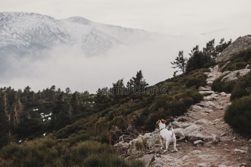 Cute small dog standing on a rock. Snow mountain background. Autumn or winter concept. Pets Outdoors. fog. Cute small dog standing on a rock. Snow mountain stock photography