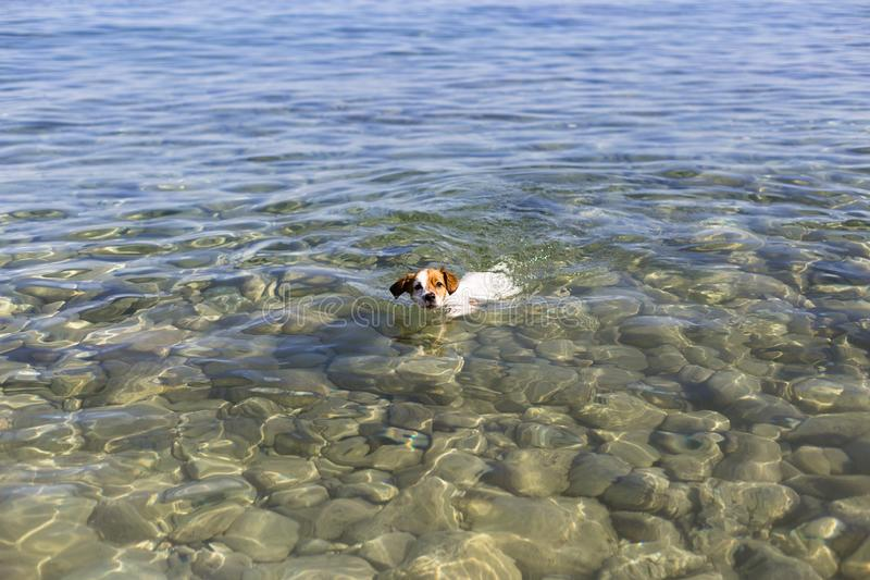 cute small dog swimming in Ibiza beautiful water. Summer and holidays concept royalty free stock photos