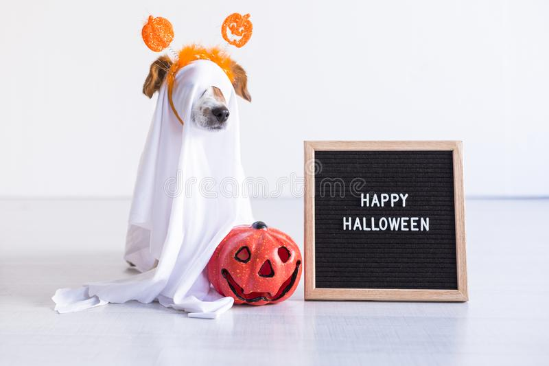 Cute small dog is wearing a ghost costume for halloween at home. pumpkin and a letter board next to him. Pets indoors. Haunt, humor, joke, animal, monster royalty free stock image