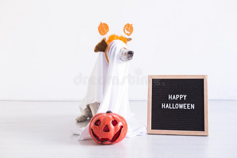 Cute small dog is wearing a ghost costume for halloween at home. pumpkin and a letter board next to him. Pets indoors. Haunt, humor, joke, animal, monster stock image