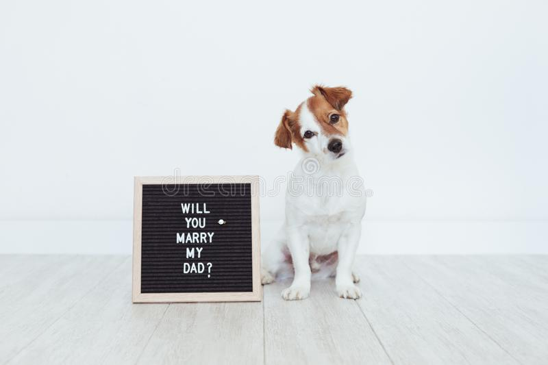 Cute small dog with a weeding ring on his head and a vintage letter board with message: will you marry my dad? Wedding concept. Pets indoors stock photography