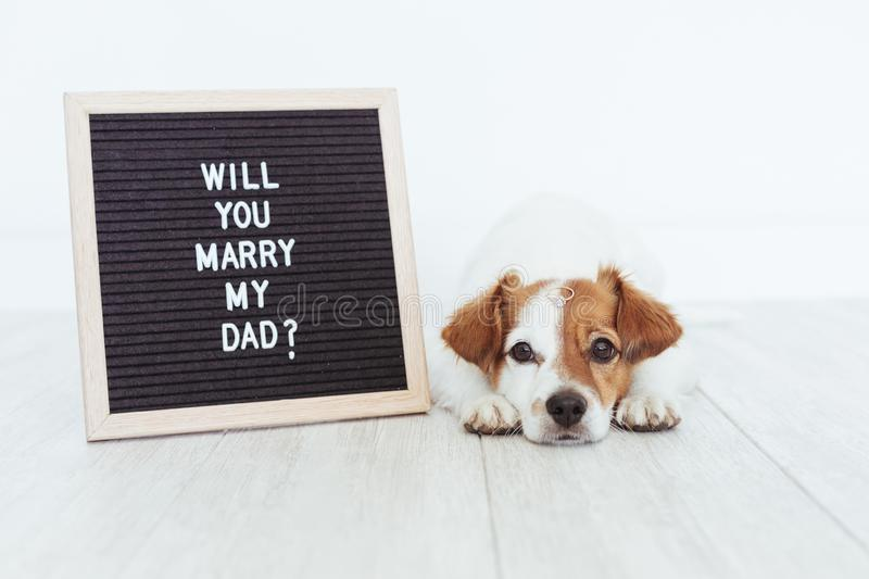 Cute small dog with a weeding ring on his head and a vintage letter board with message: will you marry my dad? Wedding concept. Pets indoors royalty free stock photos