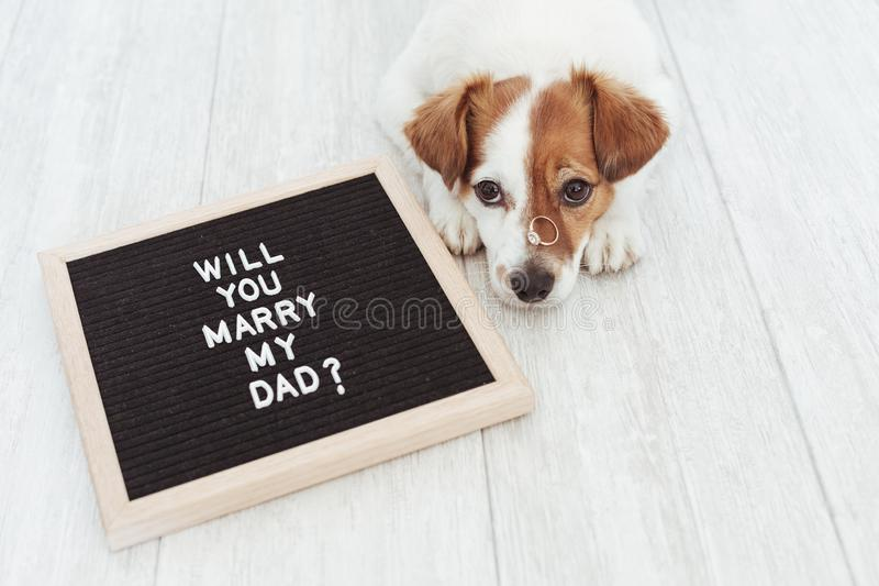 Cute small dog with a weeding ring on his head and a vintage letter board with message: will you marry my dad? Wedding concept. Pets indoors royalty free stock image