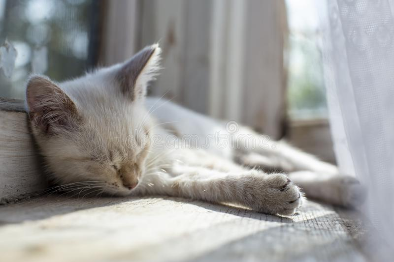 A cute, small kitten warmed himself in the sun and fell asleep on a window sill by a window in a village house stock photo