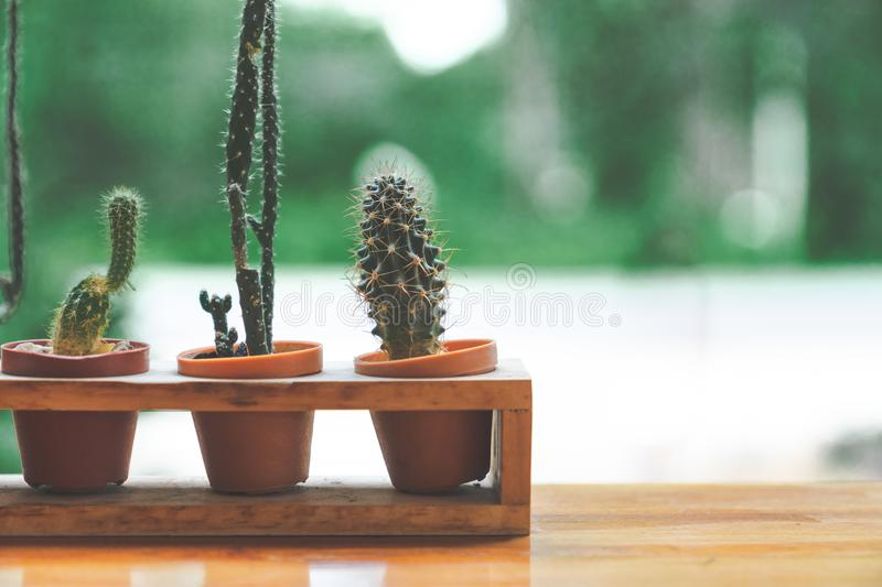 Cute small long cactus in basket on wooden table. With green background with green background stock images