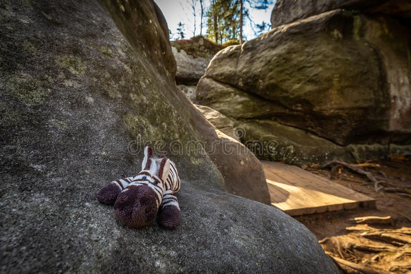 Cute small stuffed toy Zebra lying on big rock in stone labyrinth Bledne skaly. Szczeliniec Wielki in National Park Stolowe Mountains, Sudety, Poland royalty free stock images