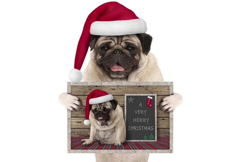 Cute smiling Christmas pug dog with santa hat, holding up greeting card with selfportrait royalty free stock photos