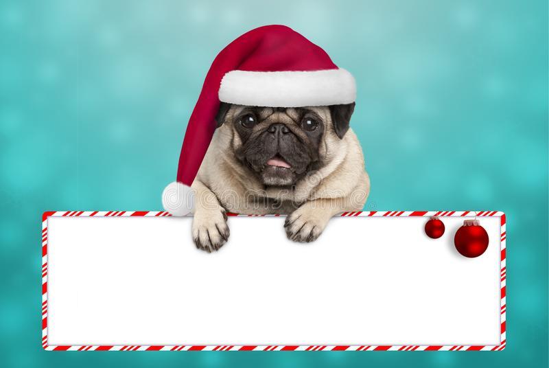 Cute smiling Christmas pug puppy dog with santa hat, hanging with paws on blank sign stock images