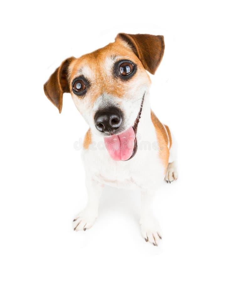 Cute Smiling Dog stock photo