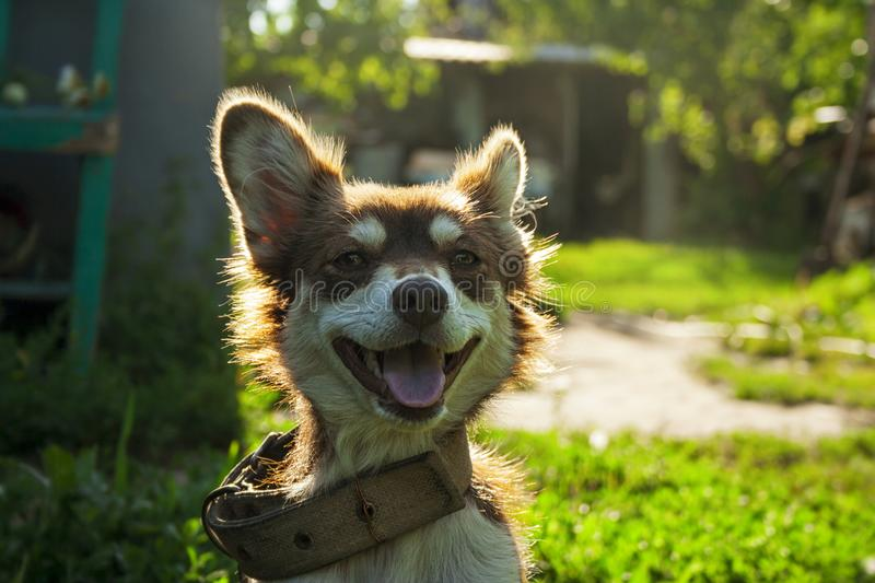 Cute smiling dog on the street stock photography