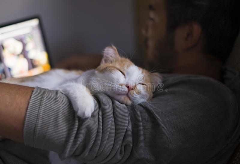 Cute smiling happy cat lying on the man`s shoulder while he is working on computer. Cute smiling happy cat lying on the man`s shoulder while he is working on royalty free stock photo