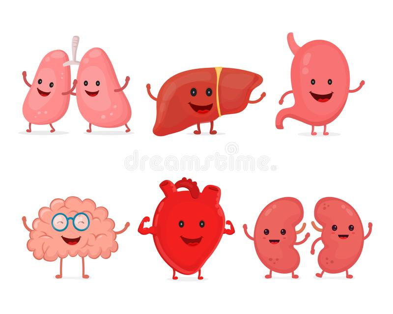 Cute smiling happy human healthy strong organs set. Vector modern style cartoon character illustration icon design. Isolated on white background. Heart, liver vector illustration